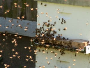 bee swarm, from website benefits of honey bees