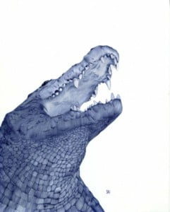 head of alligator, pen illo by Sarah Esteje