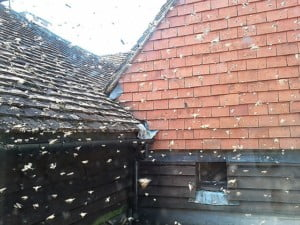 bees flying around singled house