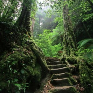 stone steps in mossy woods