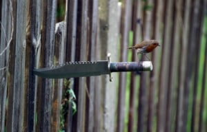 small bird on handle of hunting knife buried in fence