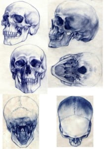 blue drawings of skulls at 6 angles